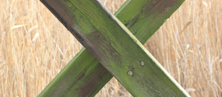 Træværk med alger
